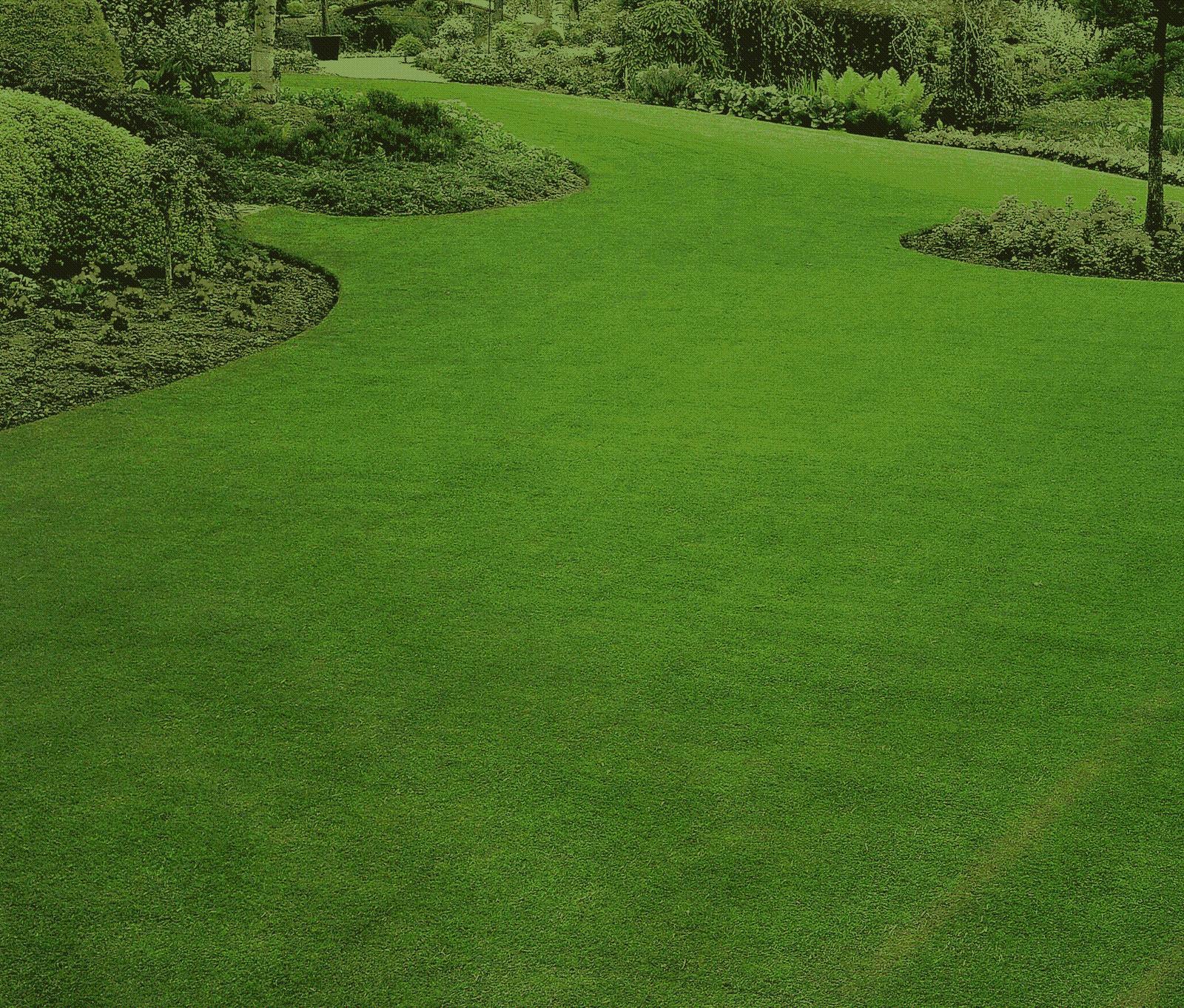 Semi sementi di prato miscuglio ombreggiato ombreggiante - Diversi tipi di erba ...